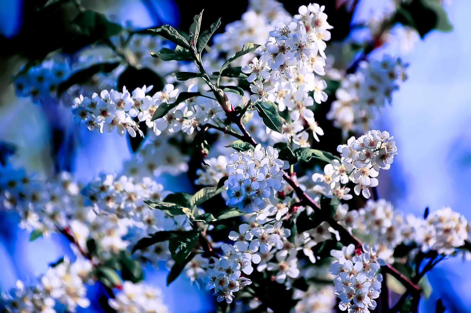 Frühling...ich warte!!!