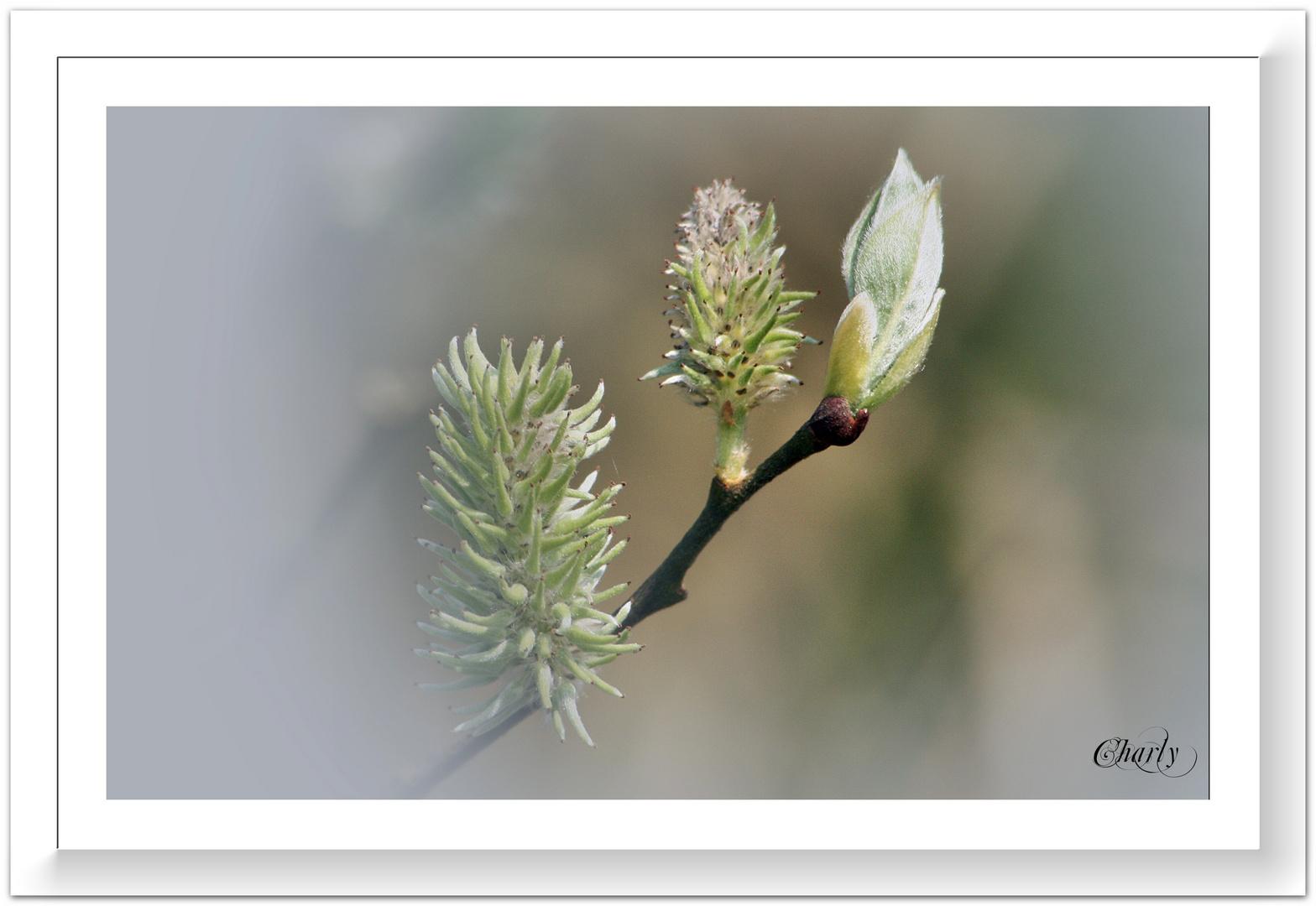 Frühling.........ist die Musik der Natur......!