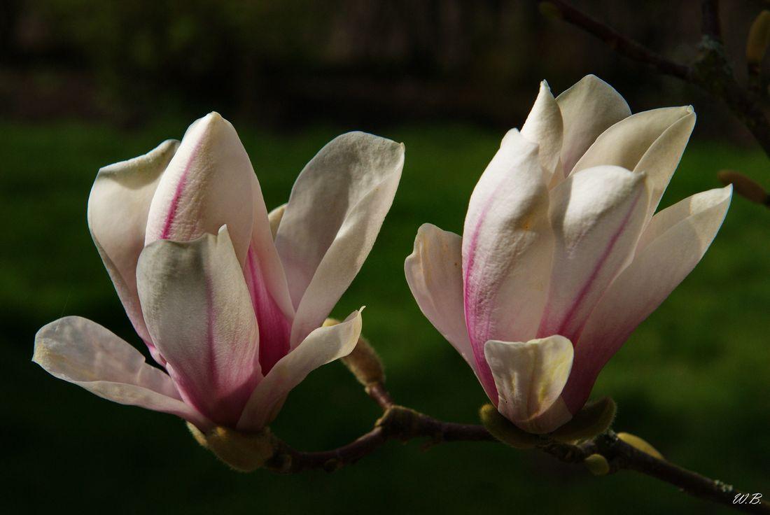 Frühlings bode