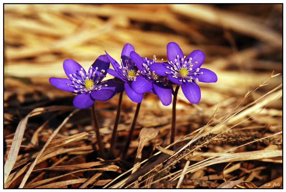 Frühlings-durchbruch