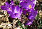Frühlings- Entdecker