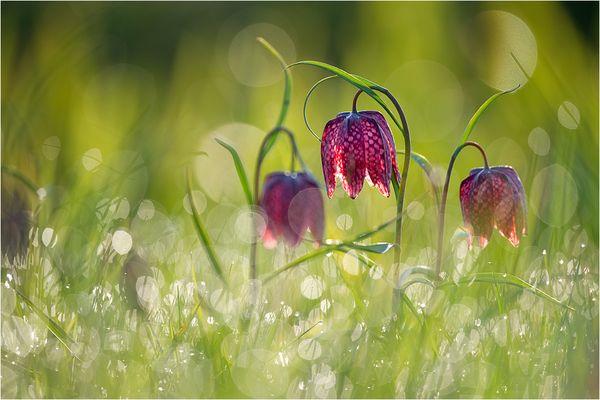 ***Frühlings Erwachen***