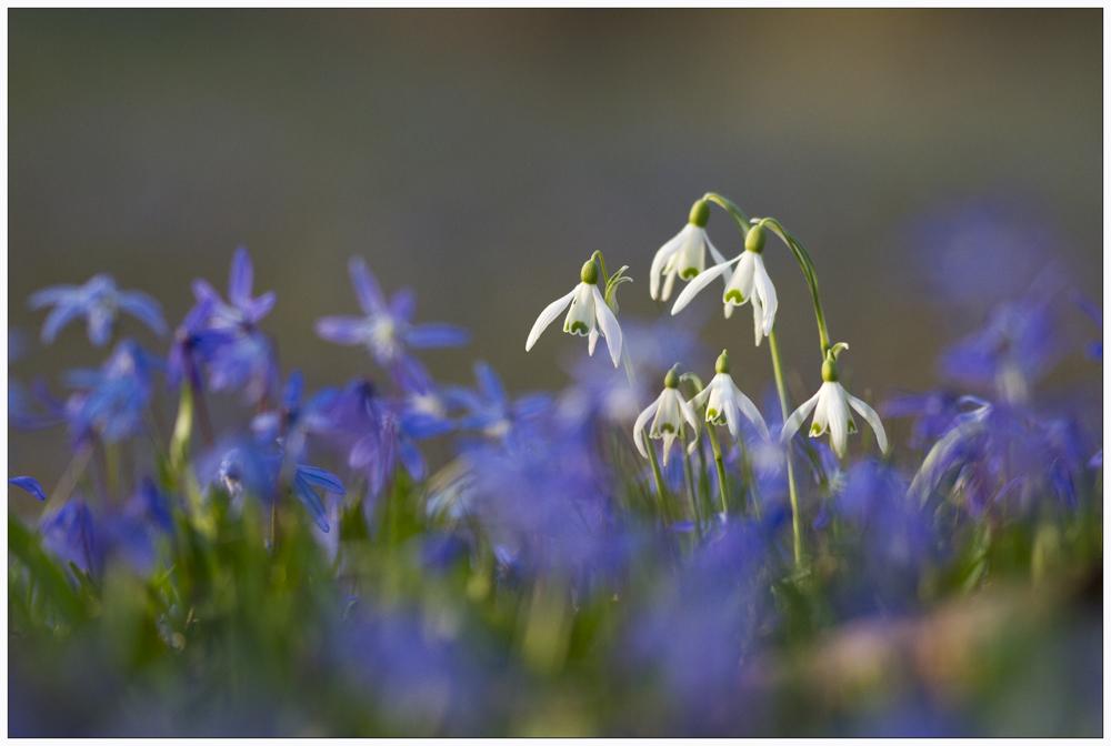 Frühlings- Erwachen