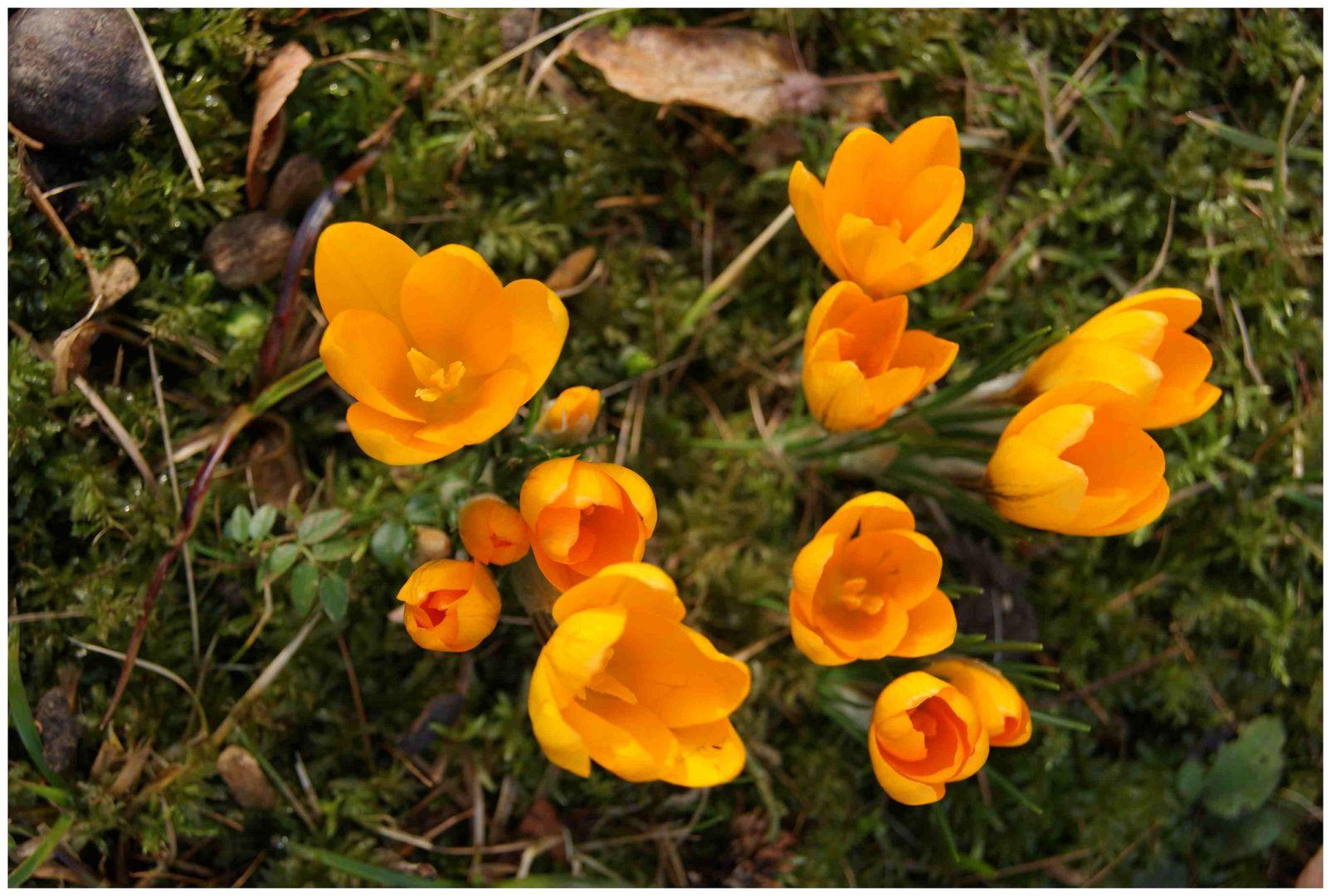 Frühlings...