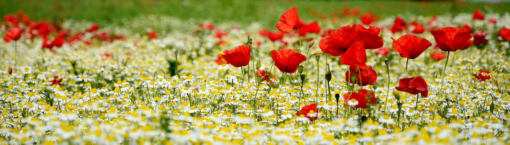 Frühlings - Farben ( 1 )