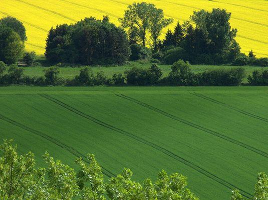 Frühlings-Felder... gekämmt ...