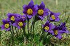 Frühlings-Geläut