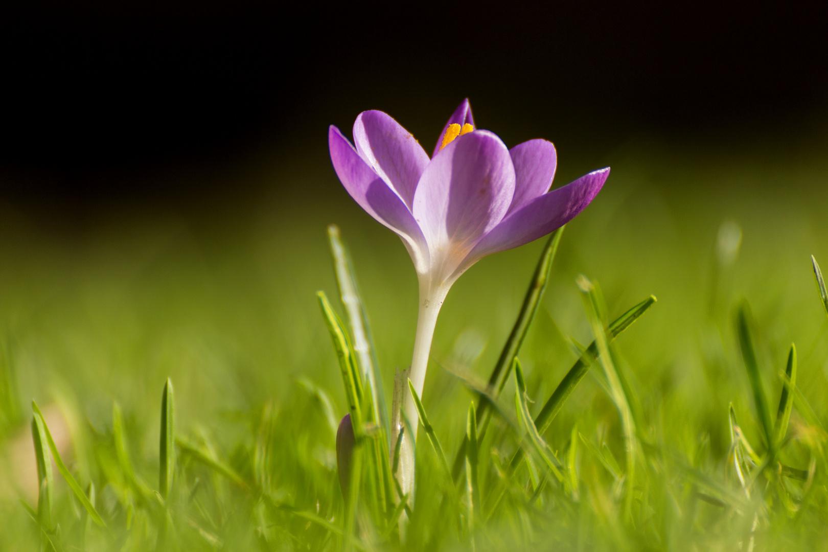 Frühlings Hoffung