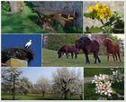 Frühlings-Impressionen
