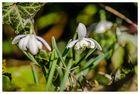 > Frühlings-Intermezzo <