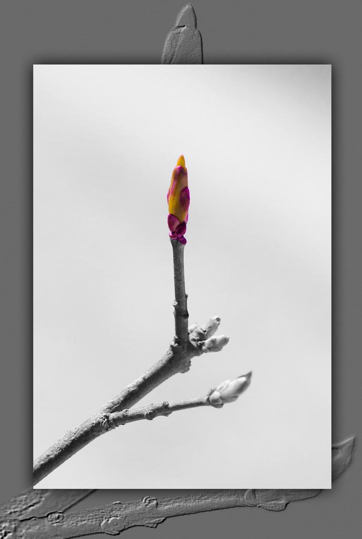 Frühlings Knospe