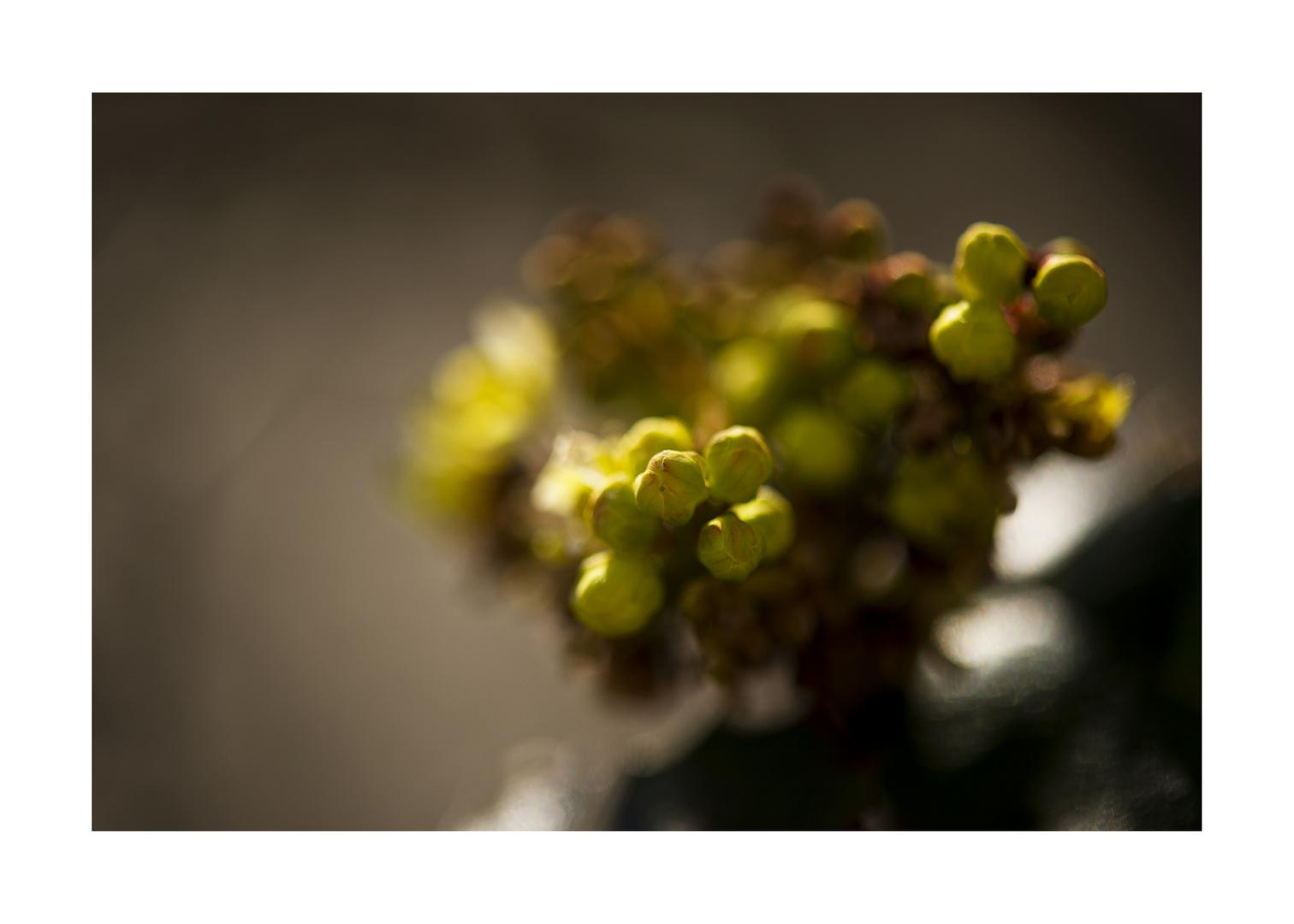 Frühlings ....leuchten....