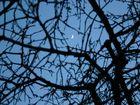 Frühlings Mond