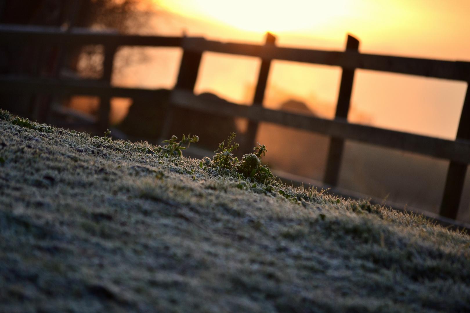 Frühlings Morgen