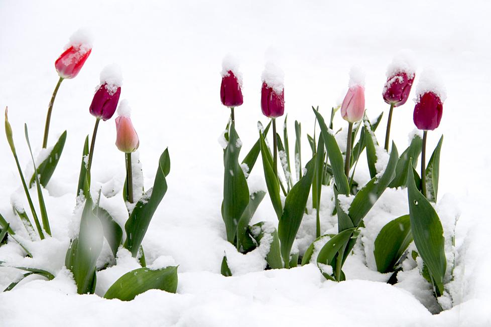 Frühlings oder Winter Impression (3)