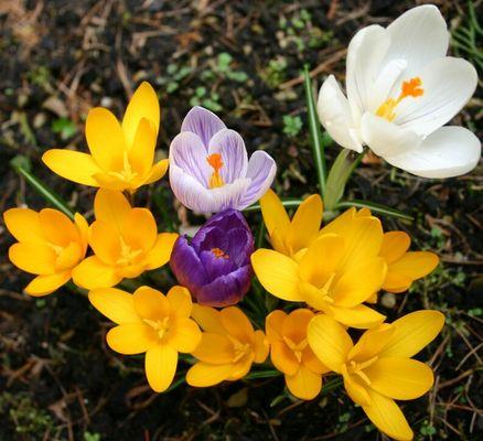 Frühlings pracht