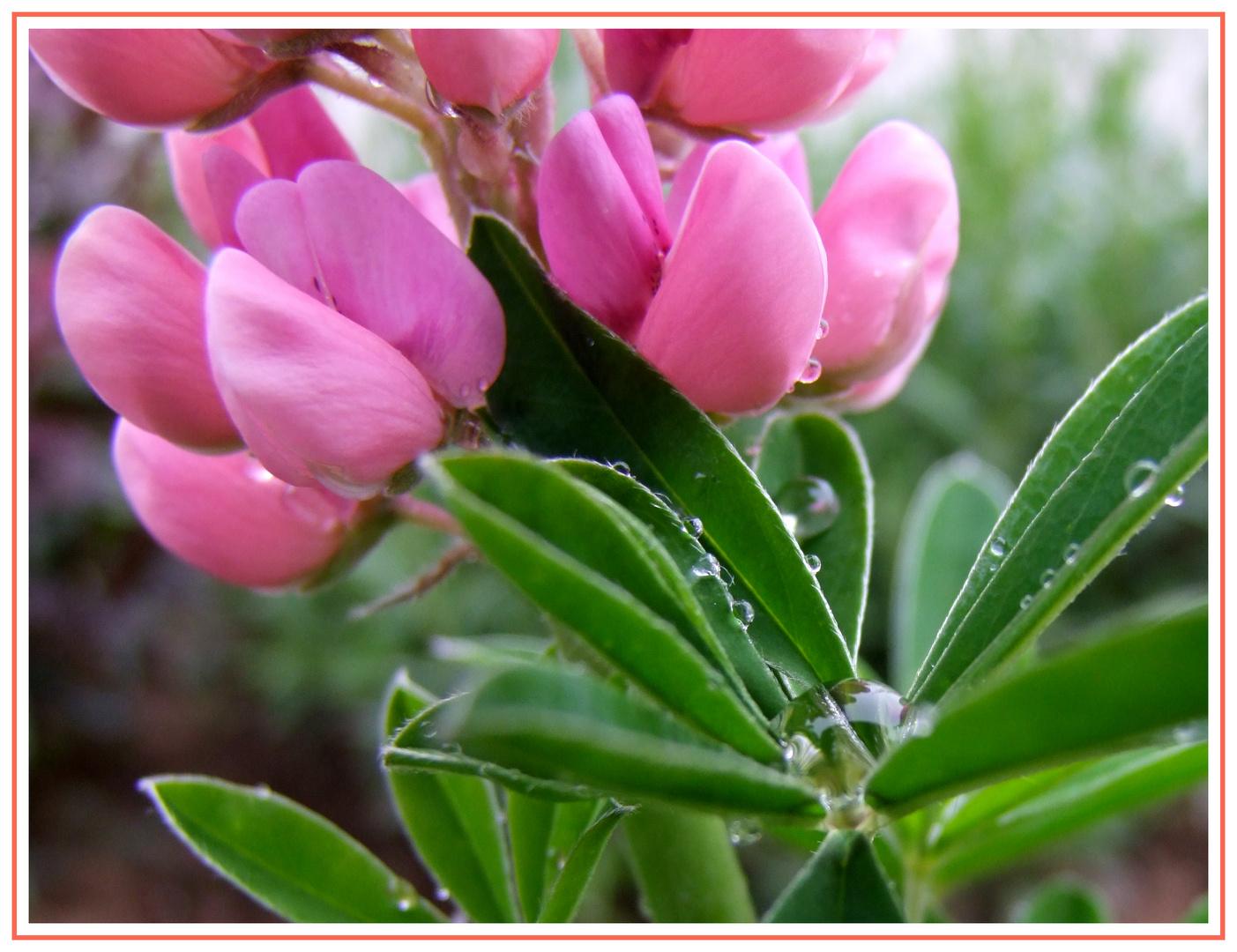 Frühlings-Regen