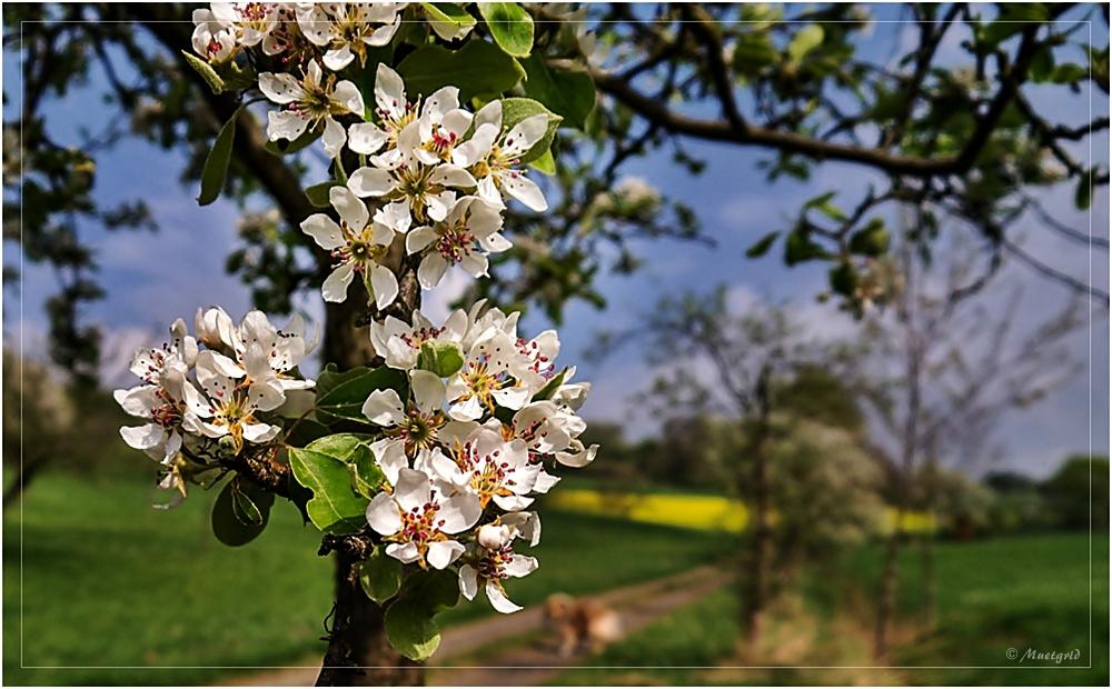~ Frühlings-Spaziergang ~