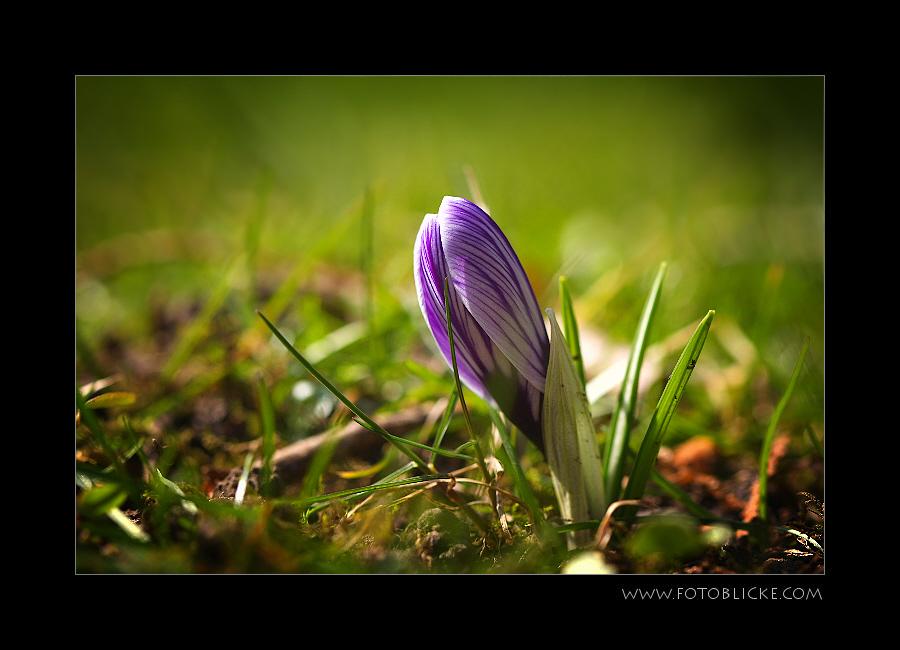 Frühlings Traum #6