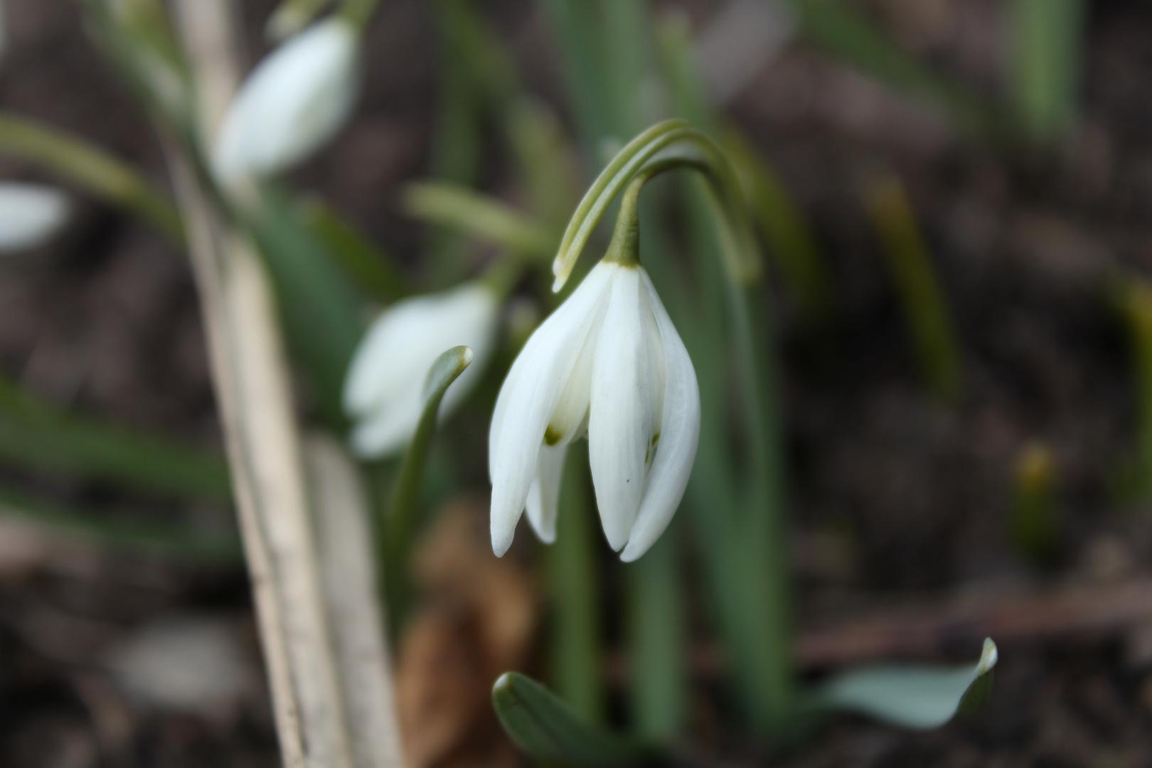 Frühlings-Tristesse