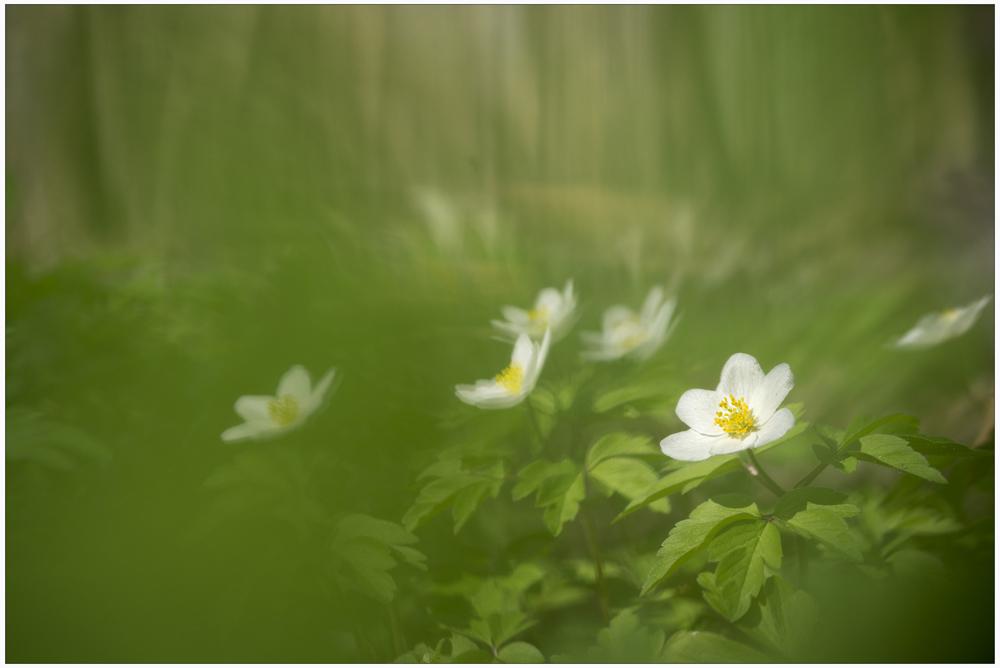 Frühlings-wald ......