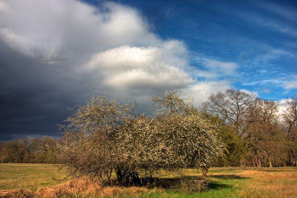 Frühlings-Wetter-Schwankung