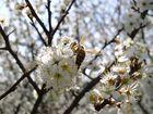Frühlings Zeit, Blüten Zeit