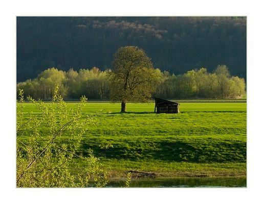 Frühlingsabend an der Weser... - oder: die Eiche, die Hütte und das Grün...