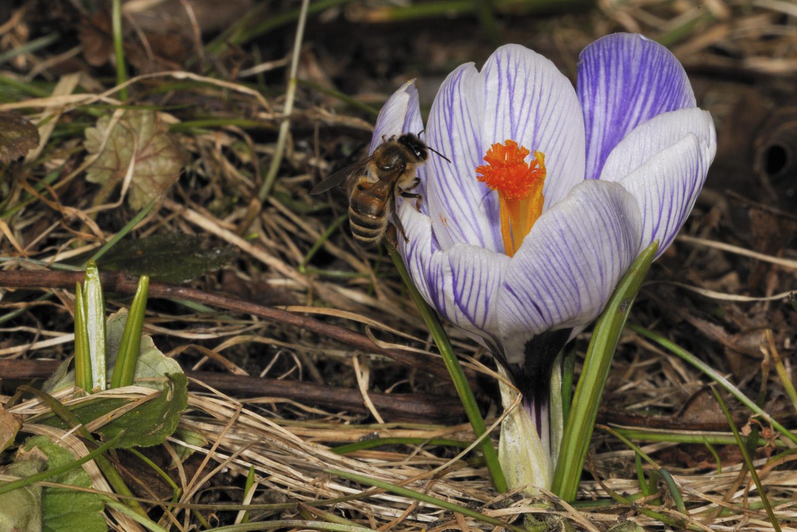 Frühlingsalarm