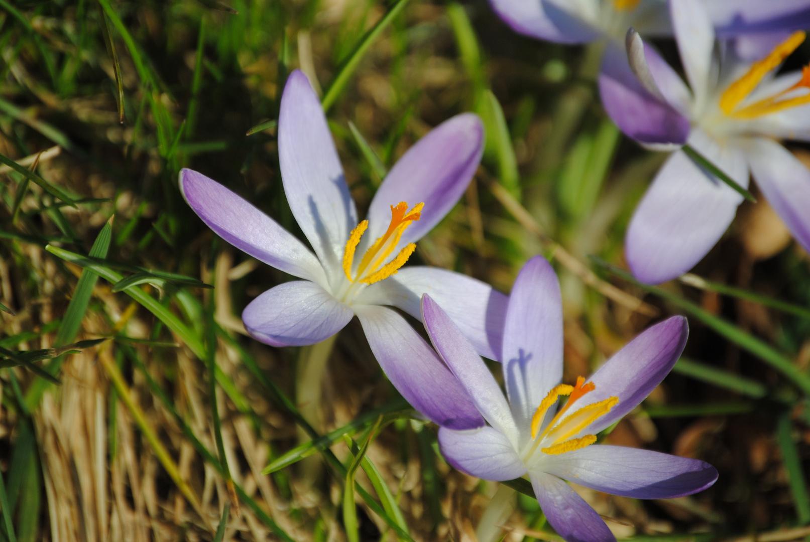 Frühlingsanfänge