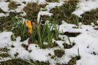 Frühlingsanfang 20.03.2013