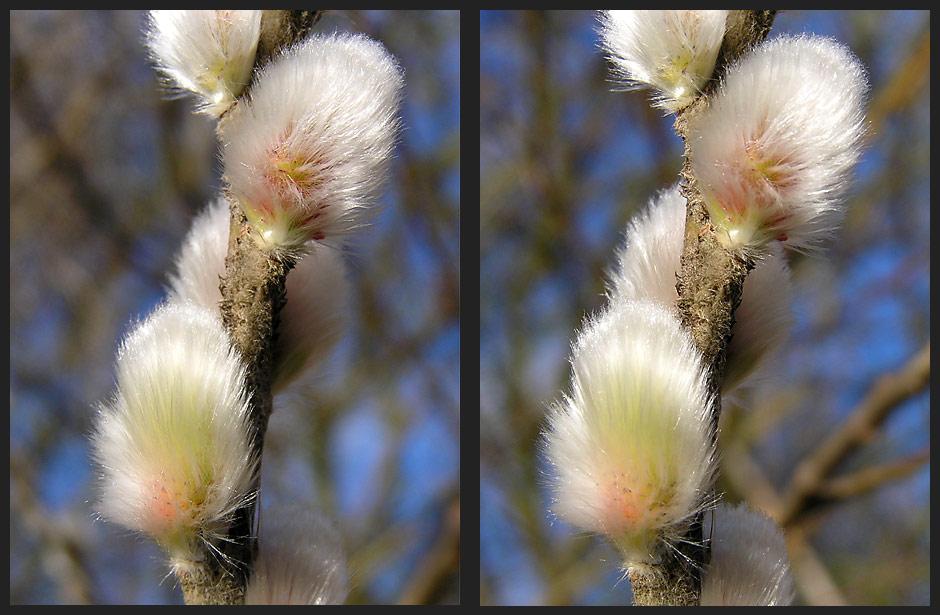 Frühlingsanfang [3D]