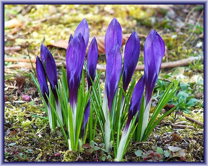 Frühlingsanfang??? Oder doch nicht!?