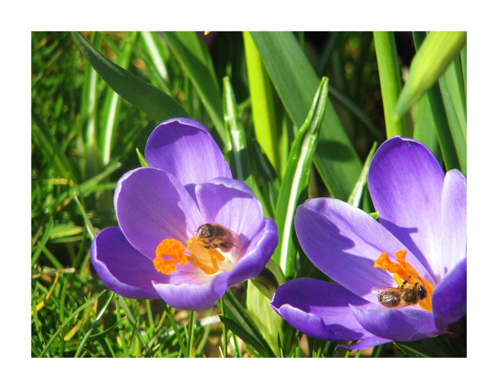 Frühlingsarbeiter