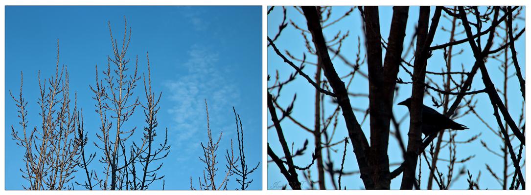 Frühlingsausblick