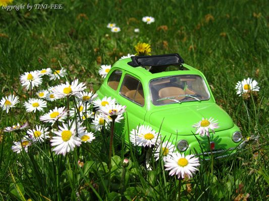 Frühlingsausfahrt