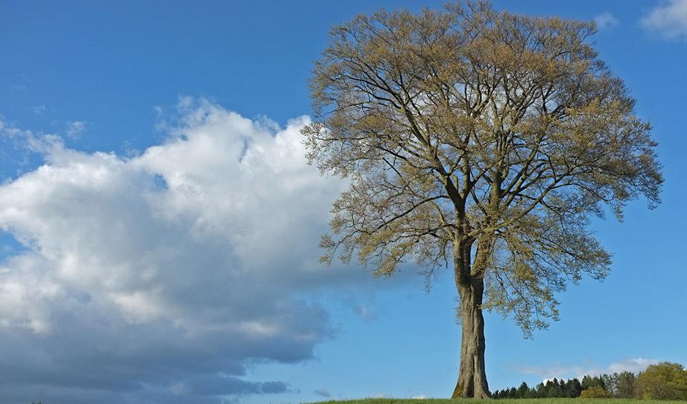 Frühlingsbaum I