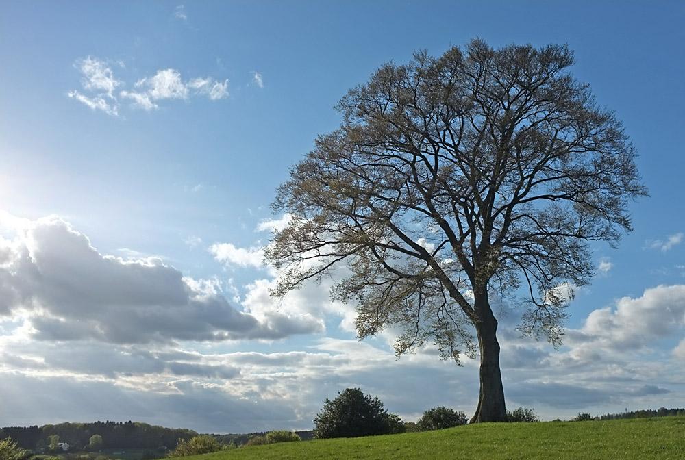 Frühlingsbaum II