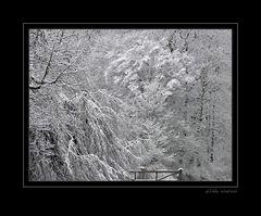 Frühlingsbeginn 2007 [4]
