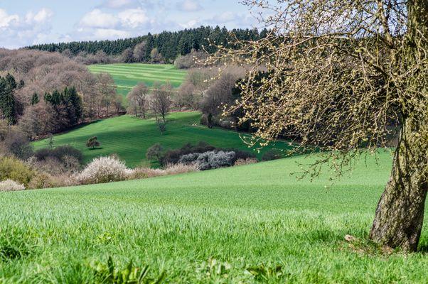 Frühlingsbeginn auf dem Ottweiler Flur (Saarland)