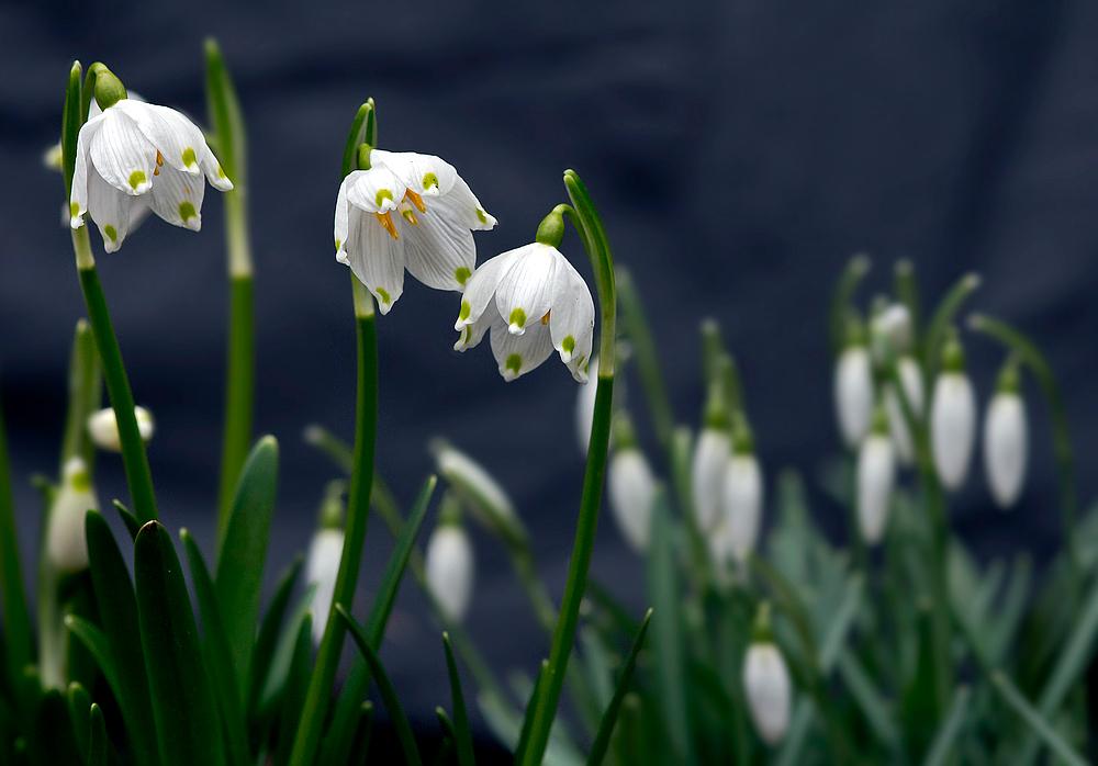 Frühlingsbeginn II
