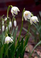 Frühlingsbeginn III