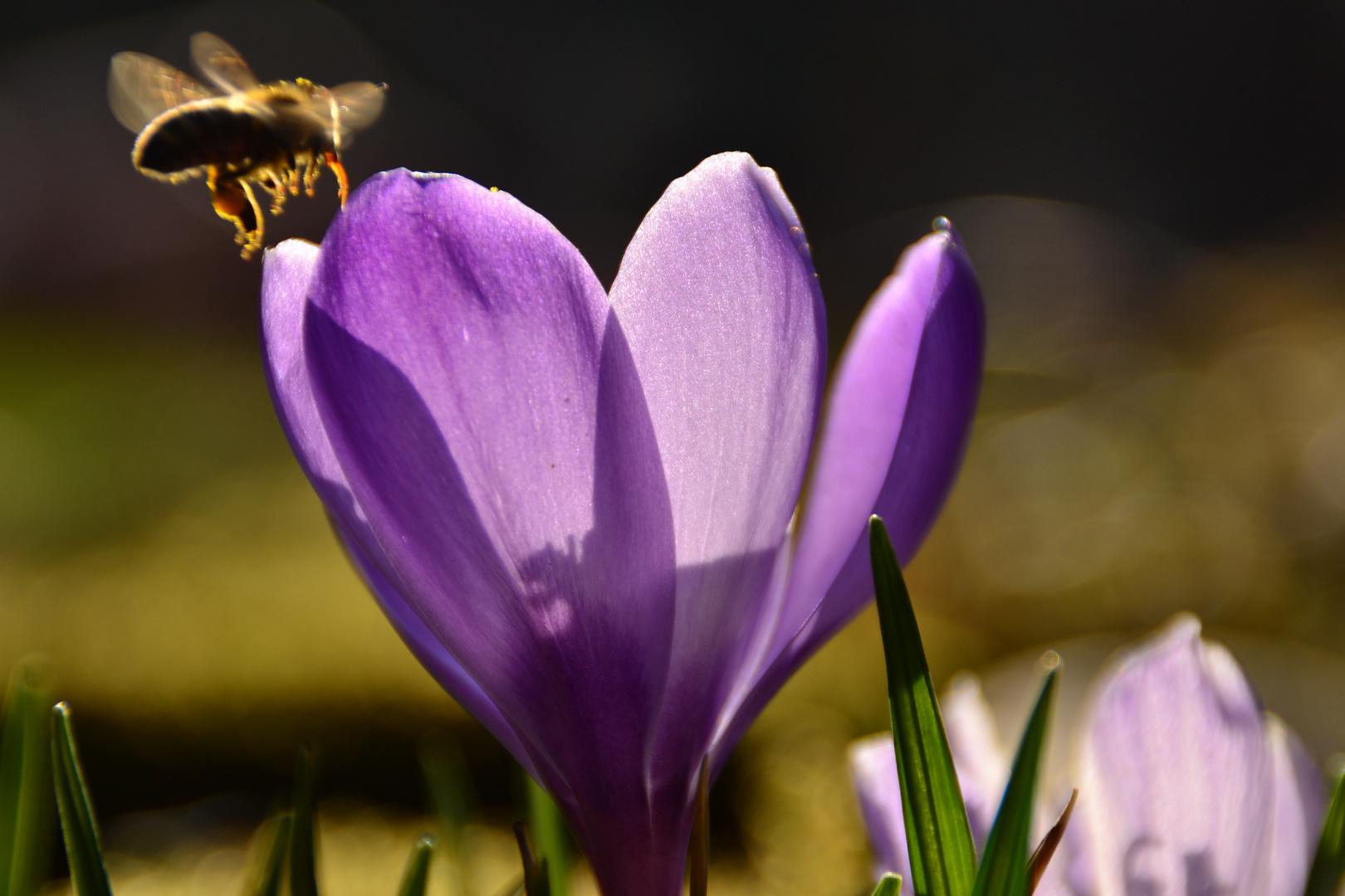 Frühlingsbesuch