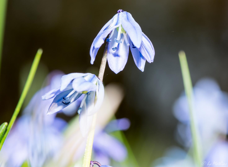Frühlingsbilder die 2te