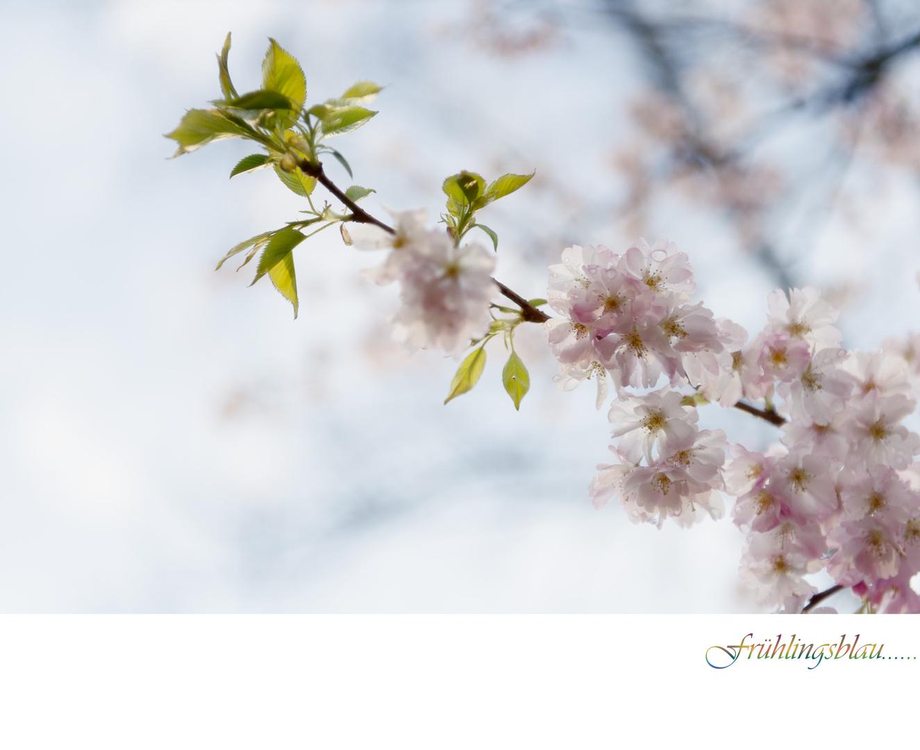 Frühlingsblau.....