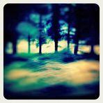 Frühlingsblauer Regenwald im Vorbeiflug