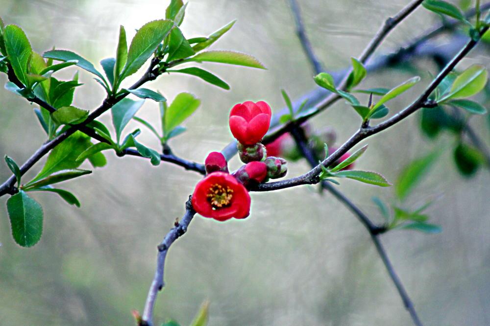 Frühlingsblüher**