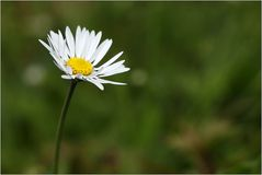 * Frühlingsblümchen *