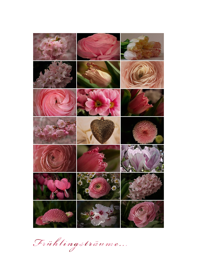 Frühlingsblüten....