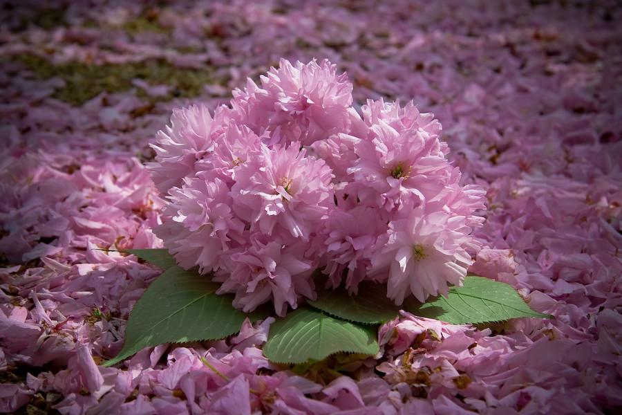 Frühlingsblüten ade